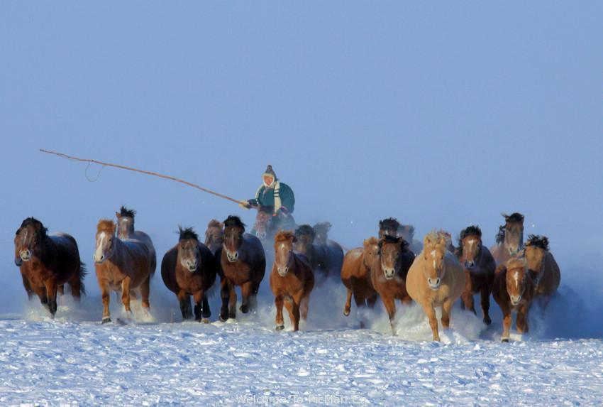 冬季呼伦贝尔雪原套马 - 宁静枫林 - 呼伦贝尔长城摄影旅游俱乐部