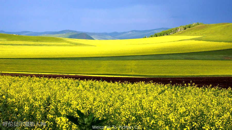 穿越中国最大的草原,感受魅力呼伦贝尔,油菜花、民俗越野摄影创作7日计划 - 宁静枫林 - 呼伦贝尔长城摄影旅游俱乐部