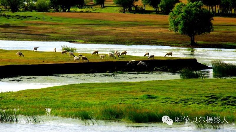 湿地-地球之肾[走进呼伦贝尔湿地] - 宁静枫林 - 呼伦贝尔长城摄影旅游俱乐部