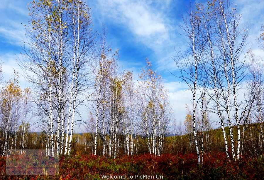 走进呼伦贝尔 感受色彩斑斓——金色的大兴安岭风光摄影采风创作团 - 宁静枫林 - 呼伦贝尔长城摄影旅游俱乐部