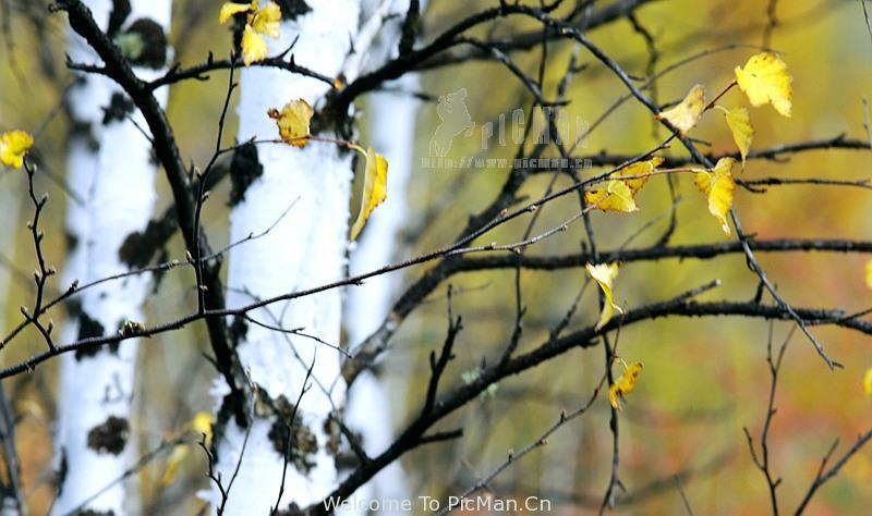 九月金秋,行摄在呼伦贝尔童话世界(2016秋季呼伦贝尔摄影推荐) - 宁静枫林 - 呼伦贝尔长城摄影旅游俱乐部