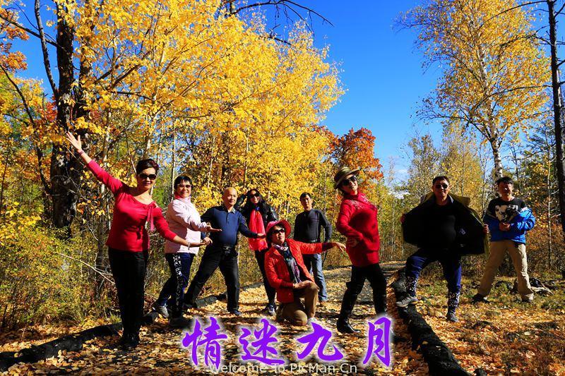 情迷九月,呼伦贝尔金色之旅 - 宁静枫林 - 呼伦贝尔长城摄影旅游俱乐部
