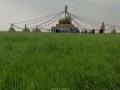 呼伦贝尔草原风