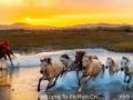 巴尔虎蒙古蒙古