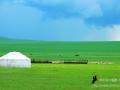歌词《牵挂草原